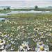 Kamille langs de IJssel