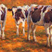 Cow calves in the early morning