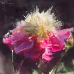 Paeonia 'Bowl of beauty'