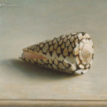 'Rembrandt' shell
